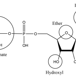 How To Write Class Diagram Branches Of Coronary Arteries Functional Groups | Mcc Organic Chemistry