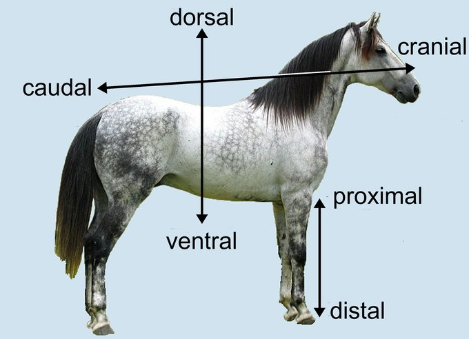 1.4B: Directional Terms - Medicine LibreTexts
