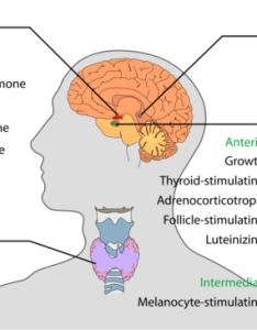 Comparing the nervous and endocrine systems also overview of system boundless anatomy physiology rh coursesmenlearning