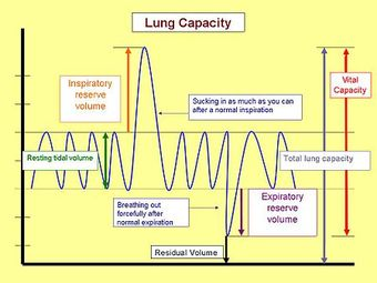 Nonrespiratory Lung Functions Boundless Anatomy And
