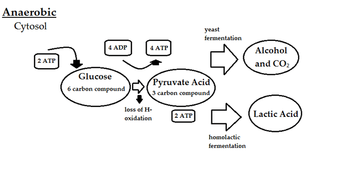 simple diagram of respiration