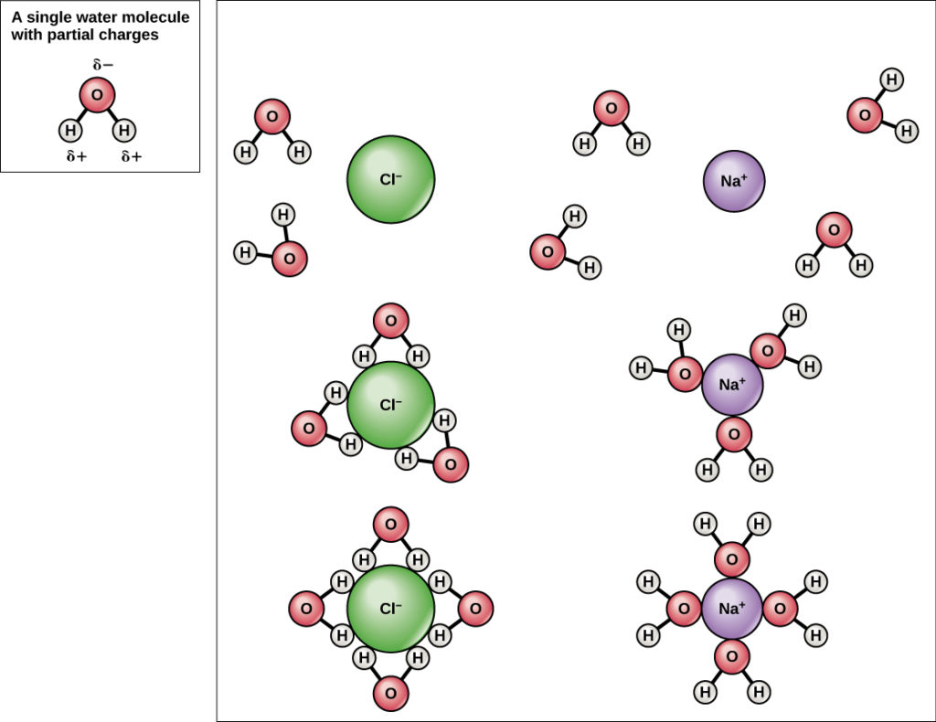 hight resolution of illustration of spheres of hydration around sodium and chlorine ions