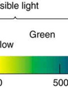 Visible spectrum  small part of the electromagnetic that includes its components isions between infrared also boundless physics rh coursesmenlearning