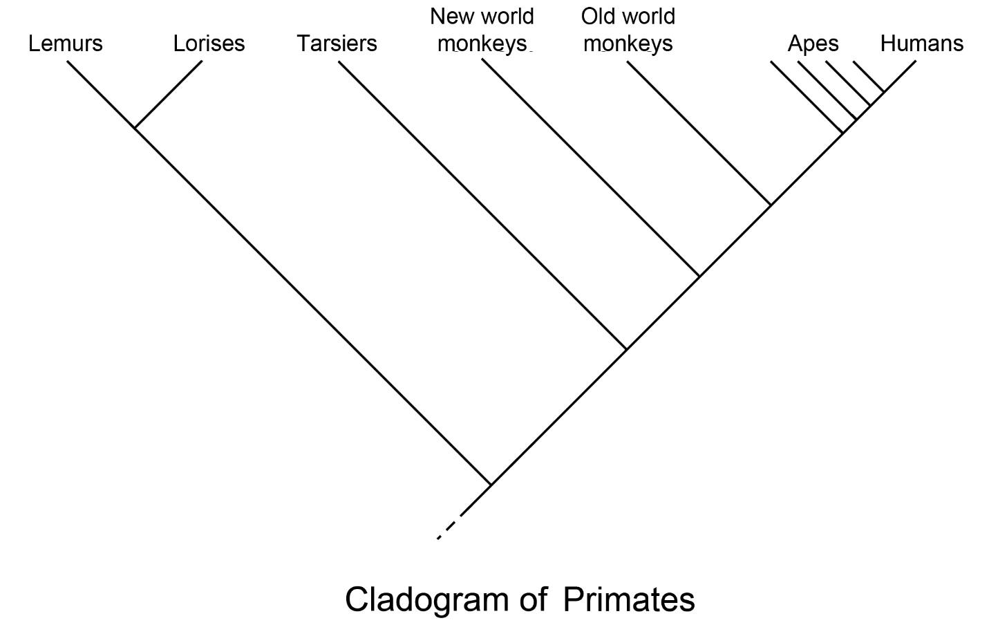 2 Primate Classification
