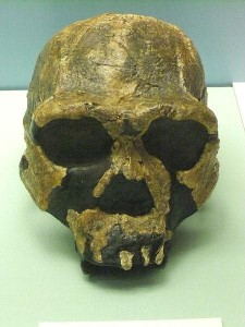 28 Homo ergaster  The History of Our Tribe Hominini