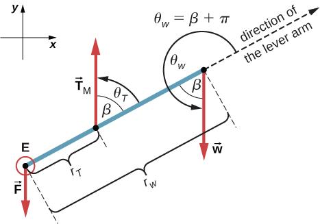 12.2 Examples of Static Equilibrium