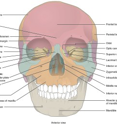 this image shows the anterior view from the front of the human skull  [ 2437 x 2062 Pixel ]
