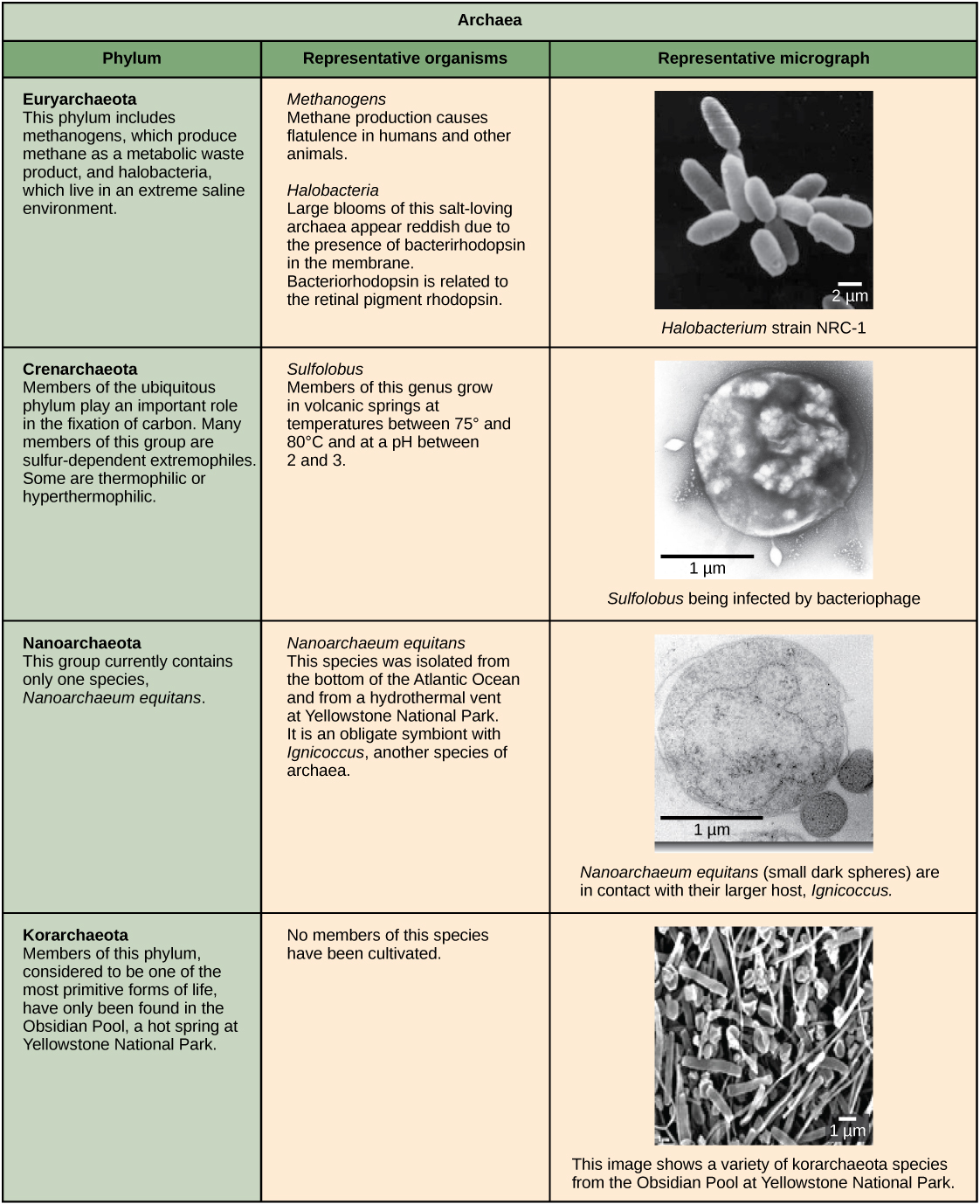 Structure Of Prokaryotes Bacteria And Archaea