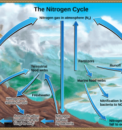 this illustration shows the nitrogen cycle nitrogen gas from the atmosphere is fixed into organic [ 2086 x 1452 Pixel ]