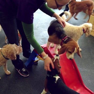 Dogtopia in the News