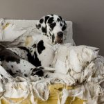 Is Your Dog's Bad Behaviour Due to Boredom?