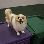 Doggy Daycare Benefits: Webcams