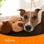5 Tips on How to Stop a Dog From Barking