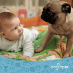 5 Tips to Prepare Your Dog for a New Baby