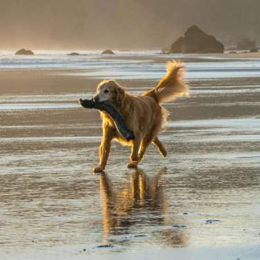 5 Safety Tips for Taking Your Dog to The Beach