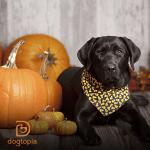 Your Dog's Next Super Food: Pumpkin