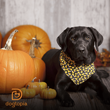 Your Dog's Next Super Food: Pumpkin