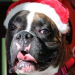 5 Holiday Safety Tips for your Dog