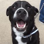 Dogtopia Announces Contest Winner