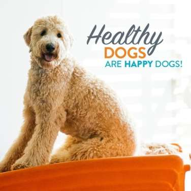 Dogtopia Unveils Healthy Dog Central