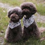 Healthy Dog Central: Social Pups