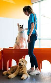 Dog behavior expert teaches dog obedience at Dogtopia