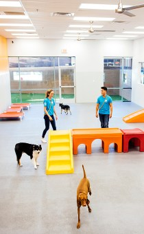 Playful dogs running