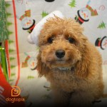 Pet-Friendly Holiday Décor Tips
