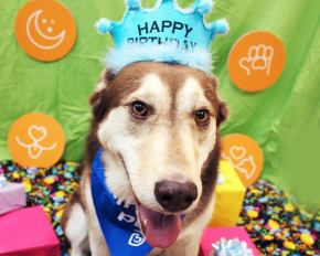 Odin celebrating his birthday at one of our birthday bashes!