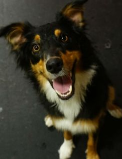Cute-Dog-Dexter