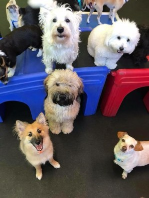 Toybox pups.