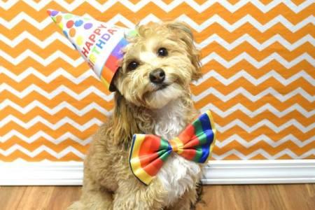September Birthday Party