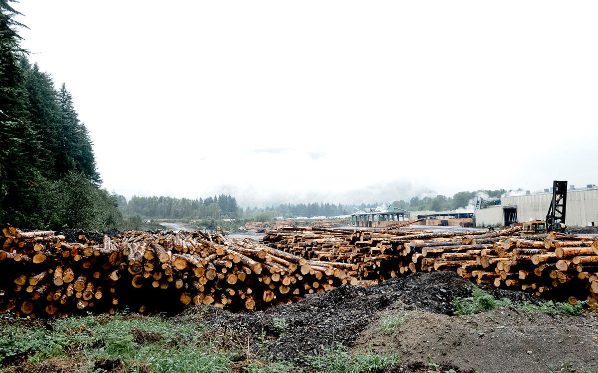 Air Dried Lumber Suppliers