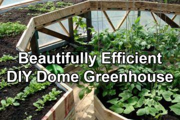 Grow Dome Garden