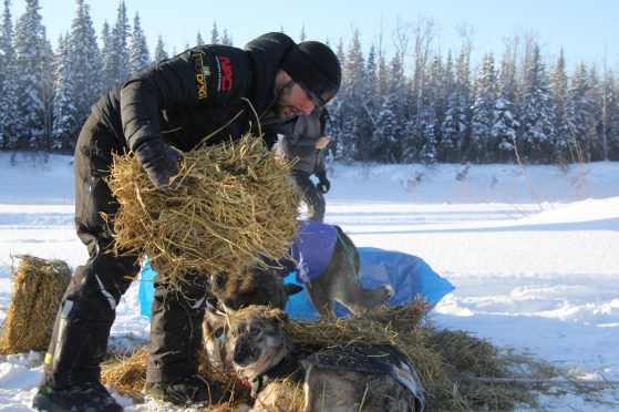 Richie Diehl puts straw down for his dogs to sleep on in in Nikolai on Tuesday. (Photo by Zachariah Hughes/Alaska Public Media)