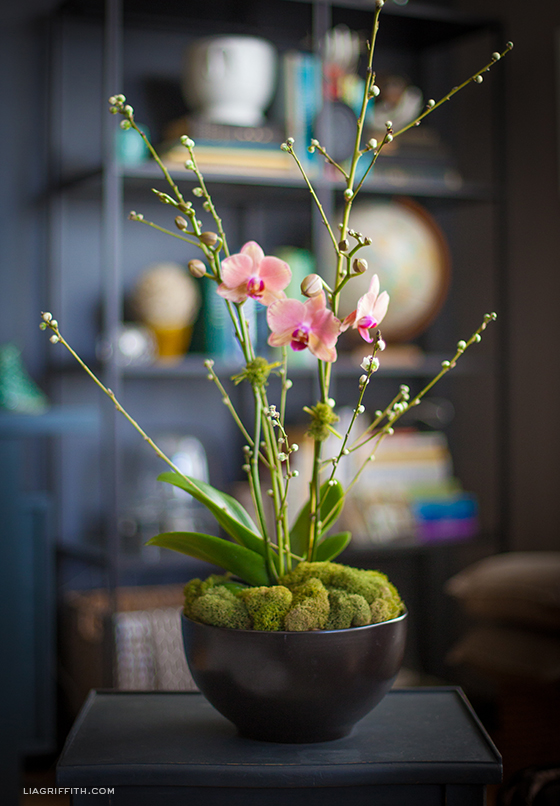 How To Style An Orchid Plant  Lia Griffith