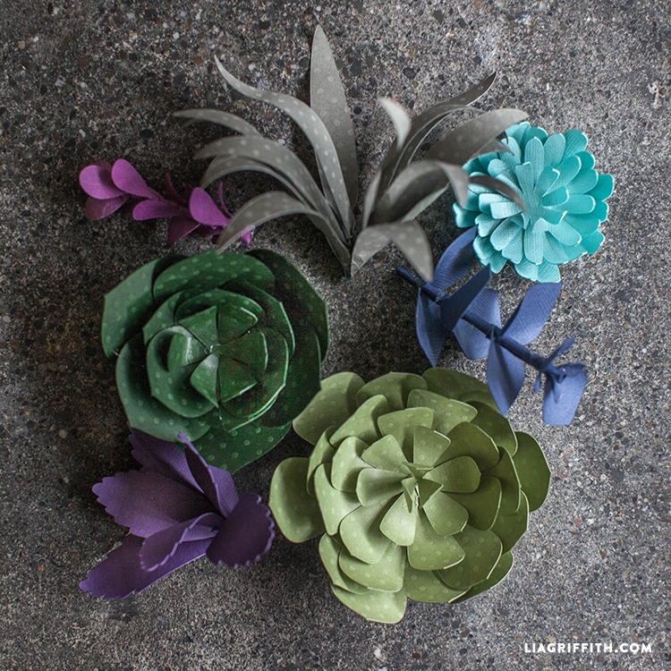 Succulent Patterns Templates