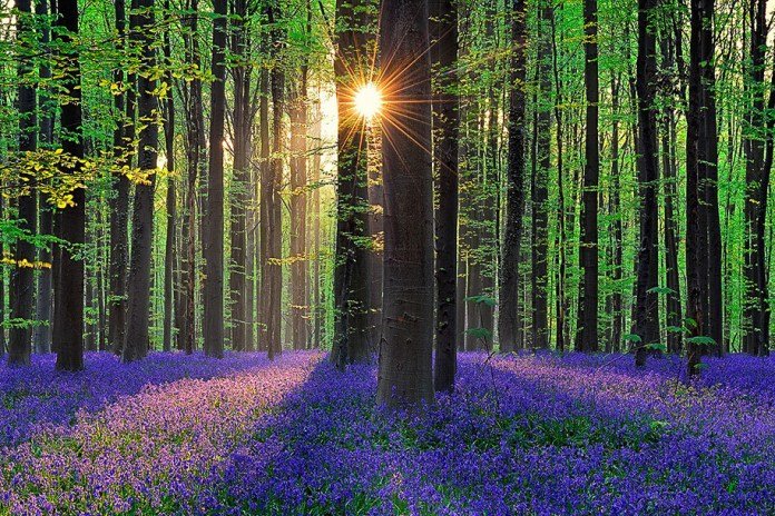The Most Unique and Mysterious Forests in the World