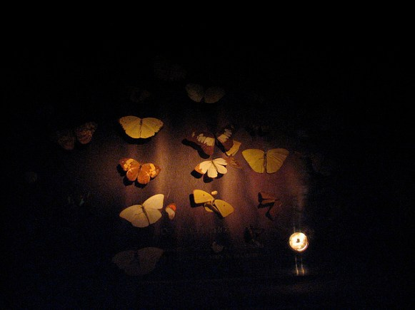 Butterflies at the Museum of Jurassic Technology by Mulling it Over, Flickr/CC