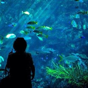 Photo via the Aquarium of the Pacific Facebook page