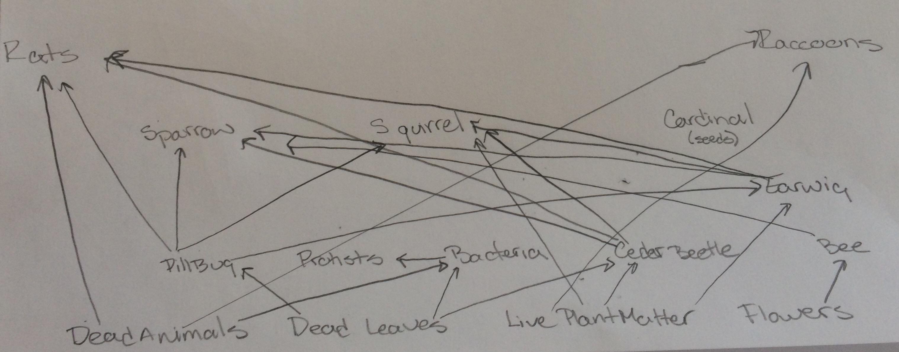diagram of a pill bug reverse camera wiring user jordan lenkin notebook biology 210 at au openwetware
