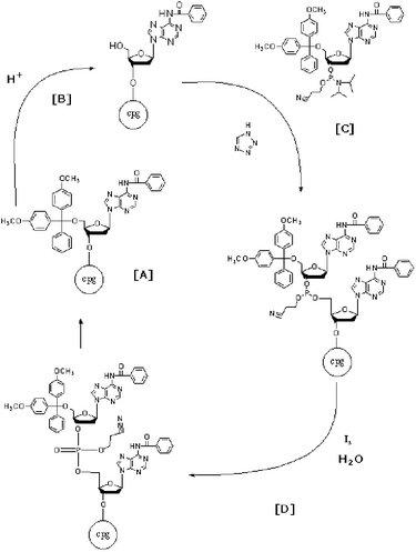 BE.109:Bio-material engineering/Optimizing panning