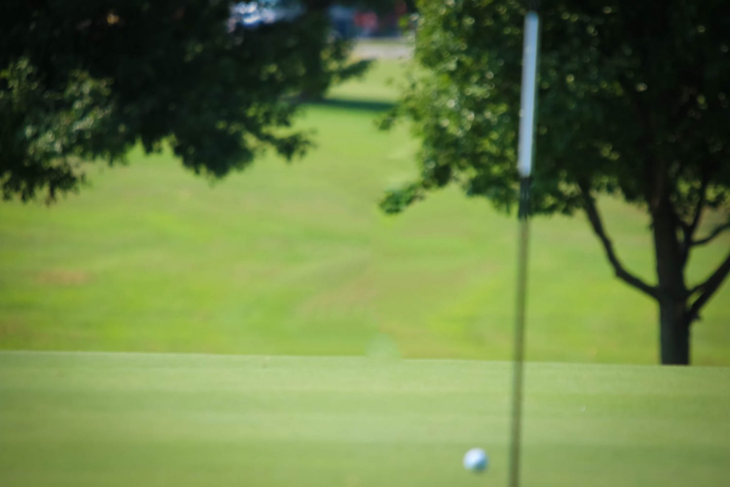 Hamilton Leads Tiger Golfers At Fremont Hills