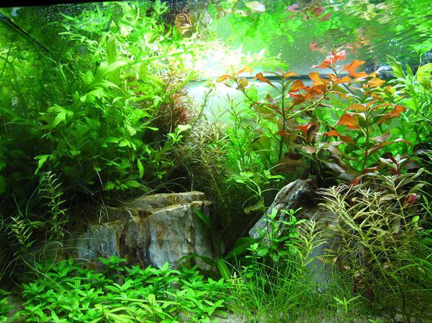 Aquarium Plants Sale Canada