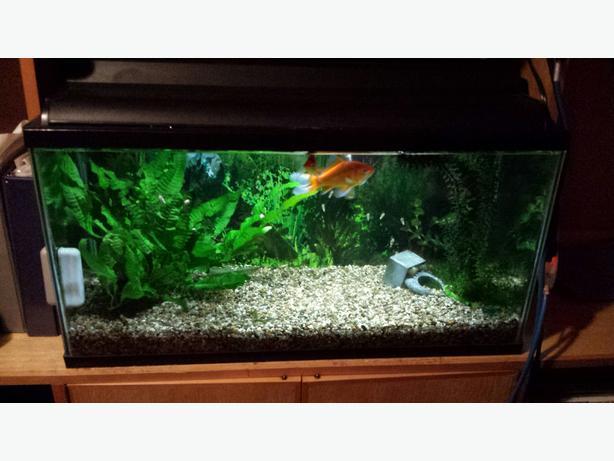 Aquarium Plants Winnipeg