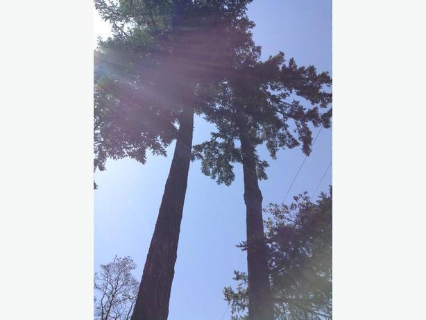 full tree service tree