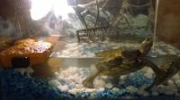 Basking Lamp For Turtles. Do U Need A UVB Light And A ...
