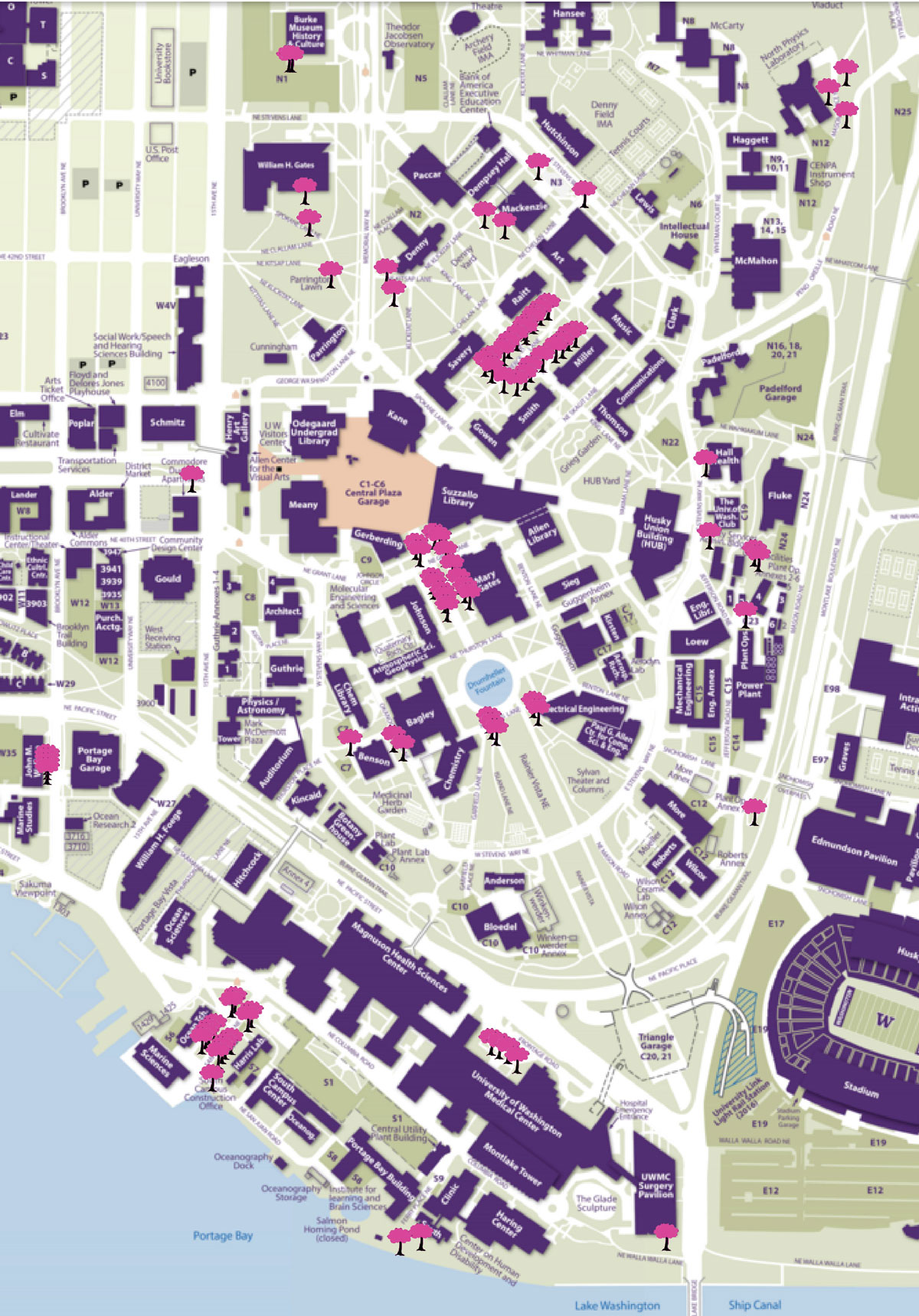 Uw Seattle Campus Map : seattle, campus, Round, Cherry, Blossom, Season, Underway