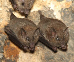 Image of bats in their natural habitat.