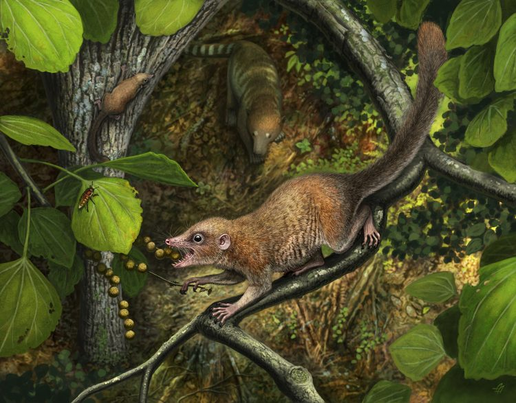 Scientists describe the oldest fossils of primates